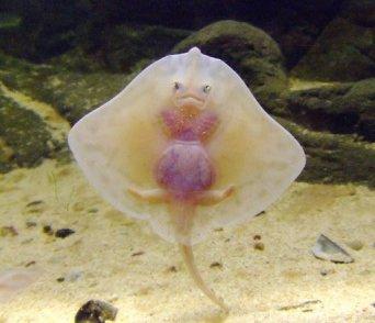 http://pushthefuture.files.wordpress.com/2009/02/funny-fish1.jpg